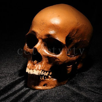 P-Flame Brown Color Human Skull Replica Resin Crafts Model Medical Realistic Handmade Home Decoration Size:11x7x8.5cm