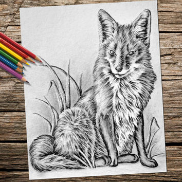 Fox Animal coloring book page, adult coloring book, coloring page, adult coloring page, coloring book, printable, fox art, printable