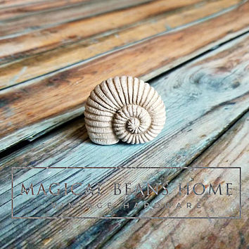 Conch Shell Drawer Knobs Nautical Knobs Coastal Cottage Knob Sea Shell Decorative Drawer Knobs Coastal Decor Dresser Knob Dresser Hardware