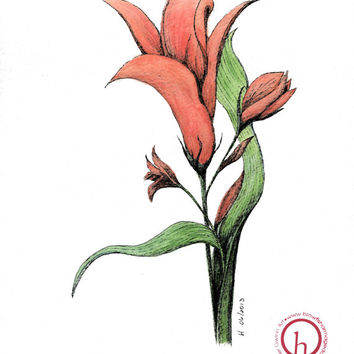 LILLY: Watercolor painting and Pen botanical art floral illustration 8x10 Limited Edition Fine Art Print