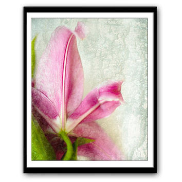 Instant Download Photography, Pink Stargazer Lily, Nature Photography, Downloadable Image, Blog Photo,Stock Photo,Downloadable Digital Print