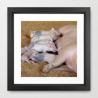 Animal Photography - Piglet Lunch Picture, Nursing Babies Print, Pigs, Breakfast, Barn, Farm, oink, sweet, cute, nursery, child, sibling