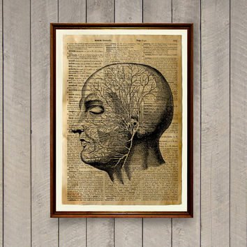 Medical illustration Vintage decor Head anatomy poster WA771