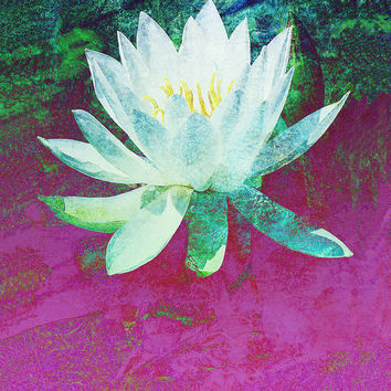 Water Lily Three