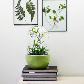 Pressed Fern // Glass Frame // Wall Art //  Wall Decor // Pressed Botanical Flowers // Black Frame // Zinc Frame