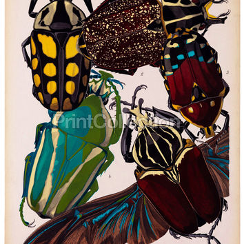 Insects, Plate 11 by E.A. Seguy