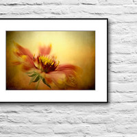 Gaillardia picture, flower photography, floral wall decor print, wall photograph, orange, yellow, red, wall art print, nature fine art
