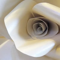FAERIE IVORY OPAL paper wall rose - wall decor wall art paper sculpture - Flower Taxidermy No.86