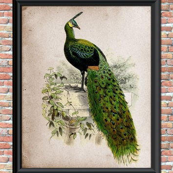 Peacock Designer Art Print Emerald Green Feathers Wall Hanging Instant Bird Art Print Nature Printable Digital Download