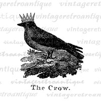 Crow with Crown Digital Image Graphic Bird Illustration Download Printable Vintage Clip Art Jpg Png Eps  HQ 300dpi No.1036