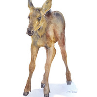 Moose Calf Watercolor Painting - 11 x 14 - Giclee Print - Nursery Art - Woodland Animal