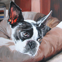 "Original Painting of a Boston Terrier lazing in the sunshine  (neutral colors) 20"" x 16"""