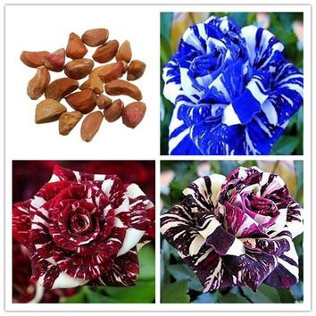 30pcs Rare Dragon Rose Flower Seeds Home Garden Decor Plants Seeds Flower