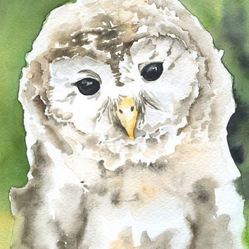 Barred Owl Watercolor