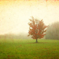 Maple Tree in Fall Colors and Fog - Orange, Red, Rust Art Print by Brooke Ryan Photography