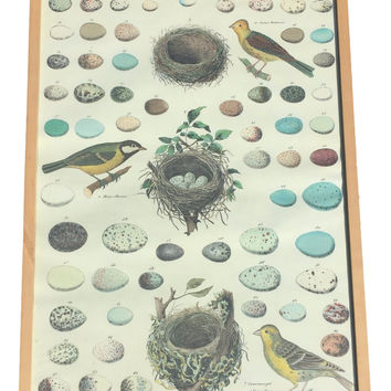 Large Framed Scientific Rendering Botanical Art of Birds, Eggs, and Nests - The Museum of Natural History