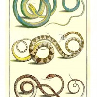 Snakes Reptiles 2001 Seba Cabinet of Natural Curiosities Poster Lithos
