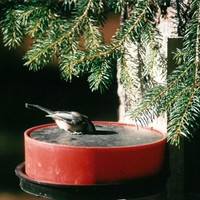 SheilaShrubs.com: Wild Bird Deluxe Solar Sipper (Red) HB10008 by Happy Bird Corporation : Bird Feeder Accessories