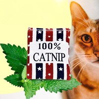 100% Linen Square Shape Catnip Bags cat Catnip Toys Different Colors Supply Cat Love It Pet Catnip Supply Pet Cat toys Training