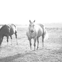 Horse Photography, North Dakota Print, Travel Photography, rustic Medora Wild West Horse Art black and white Summer print western