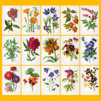 Decorative Plants (Artist A. Shipilenko) - Set of 17 Vintage Postcards - Printed in the USSR, «The Fine Arts», Moscow, 1980