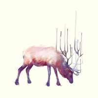 Elk // Solitude Art Print by Amy Hamilton
