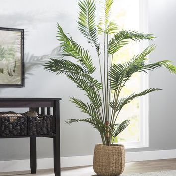 Paradise Palm Tree Floor Plant in Pot
