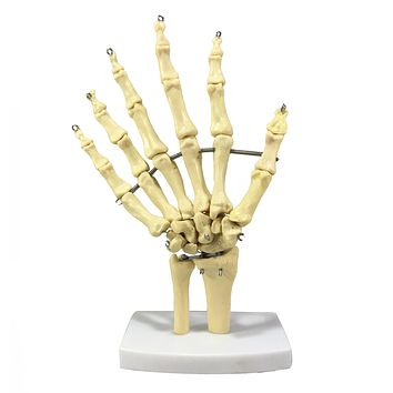 Bizarre! 6 Finger Skeleton Hand Oddity