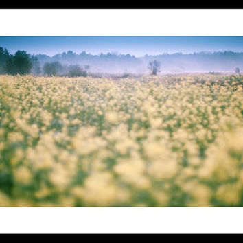 Nature photography landscape photography fine art photography 8x12 fine art print fall view yellow canola field blue sky fog wall art