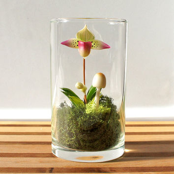 Mini Lady Slipper Orchid Terrarium by Miss Moss Gifts