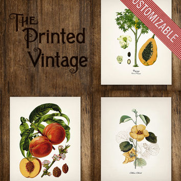 Three Flower & Fruit Vintage Botanical Prints