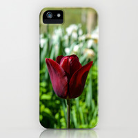 Red Rose iPhone & iPod Case by Mary Andrews