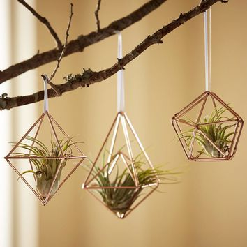 Air Plant Holder Ornaments - Set of 3