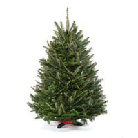 Real, Live Tabletop Christmas Tree Delivered to your Door
