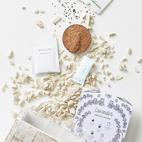 Modern Sprout Lavender Seed Box