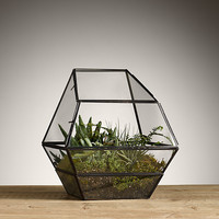 Faceted Terrarium Wide