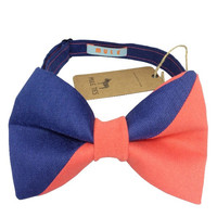 Coral Correlation Bow Tie