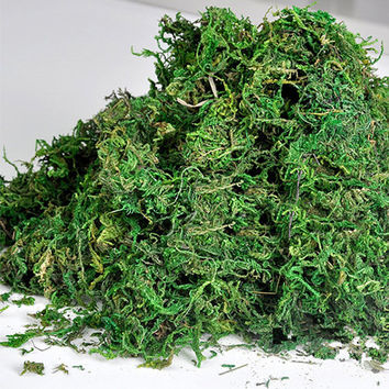 50g Dry Real Green Moss, Preserved Decorative Plants Vase Artificial Turf Flower Accessories Home Glass Dome Filling, Fairy Garden Crafts