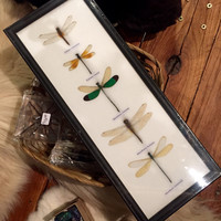 Ryker Mounted Dragonflies