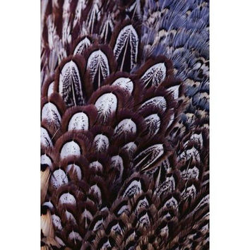 Brown, black, and white contrast in close view of pheasant feathers