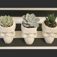 Skull Decor,  Succulent Plant pot, Gift for Her, Bridesmaid Gift