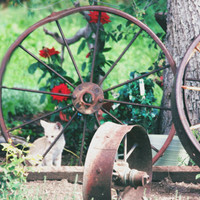 Vintage Shy Cat, Digital Art Print, Home Decor, Ready to Frame Photo, Wall Hanging, Nature Photograph, Wagon Wheel, Primitive, Nebraska Rose