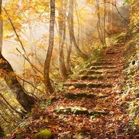atmosphere, autumn, beautiful, colorful, eden, fairy tale - inspiring picture on Favim.com