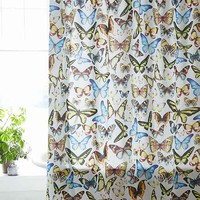 Plum & Bow Entomology Butterflies Shower Curtain - Multi One