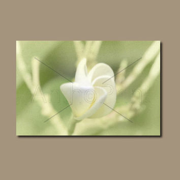 Frangipani Canvas Art For Bathrooms & more. Rectangle Wall Art Flower Print. Noosa Nature Photography. Australian Sellers. Anthotype Process