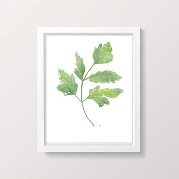 Herb Print, Watercolor Kitchen art, Parsley herb painting, Original Botanical Artwork, Plant painting, Kitchen decor, Green fine art print
