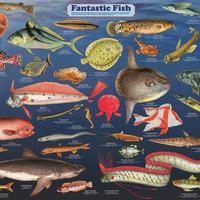 Fantastic Fish Animal Education Poster 24x36