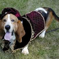 Custom Renaissance Tudor Royal Ringbearer Dog Pet Costume outfit for S-M pet