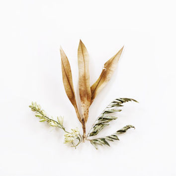 Golden Leaves. 8x10. Fine Art Photographic Natural History Print. Minimal simple style. Natural Home Decor. Indoor garden botanical