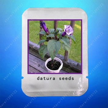 100pcs/bag purple datura seeds,planting datura,bonsai datura flower,professional pack,pot plant for home garden